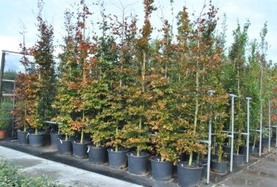 Assortiment bomen