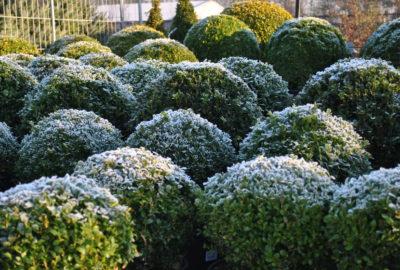 groenblijvende planten