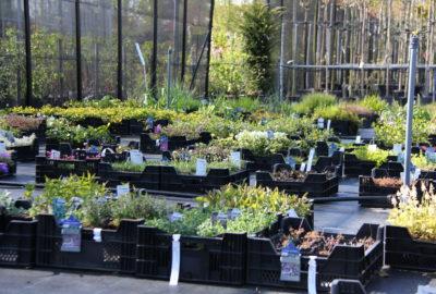 vaste planten voorraad
