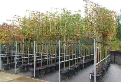 leibomen en schermbomen